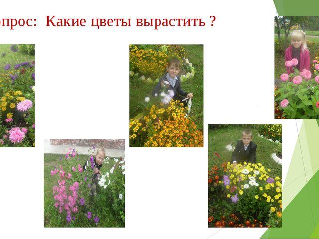1 вопрос: Какие цветы вырастить ?