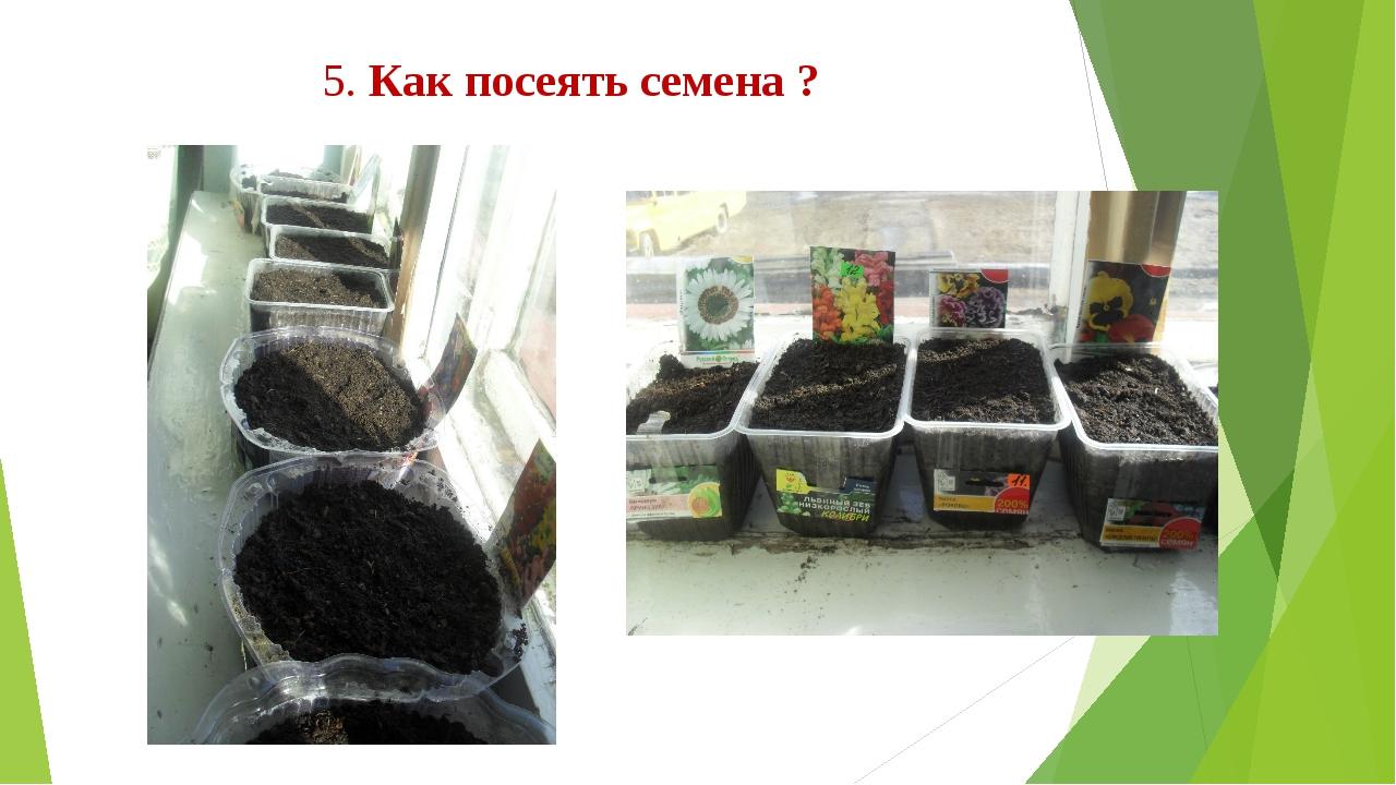 5. Как посеять семена ?