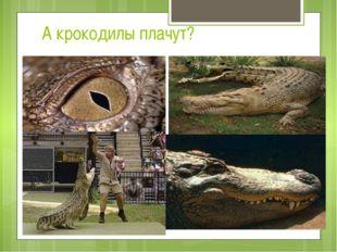 А крокодилы плачут?