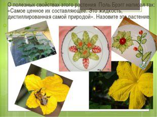 О полезных свойствах этого растения Поль Брэгг написал так: «Самое ценное их