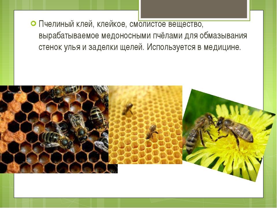 Пчелиный клей, клейкое, смолистое вещество, вырабатываемое медоносными пчёлам...