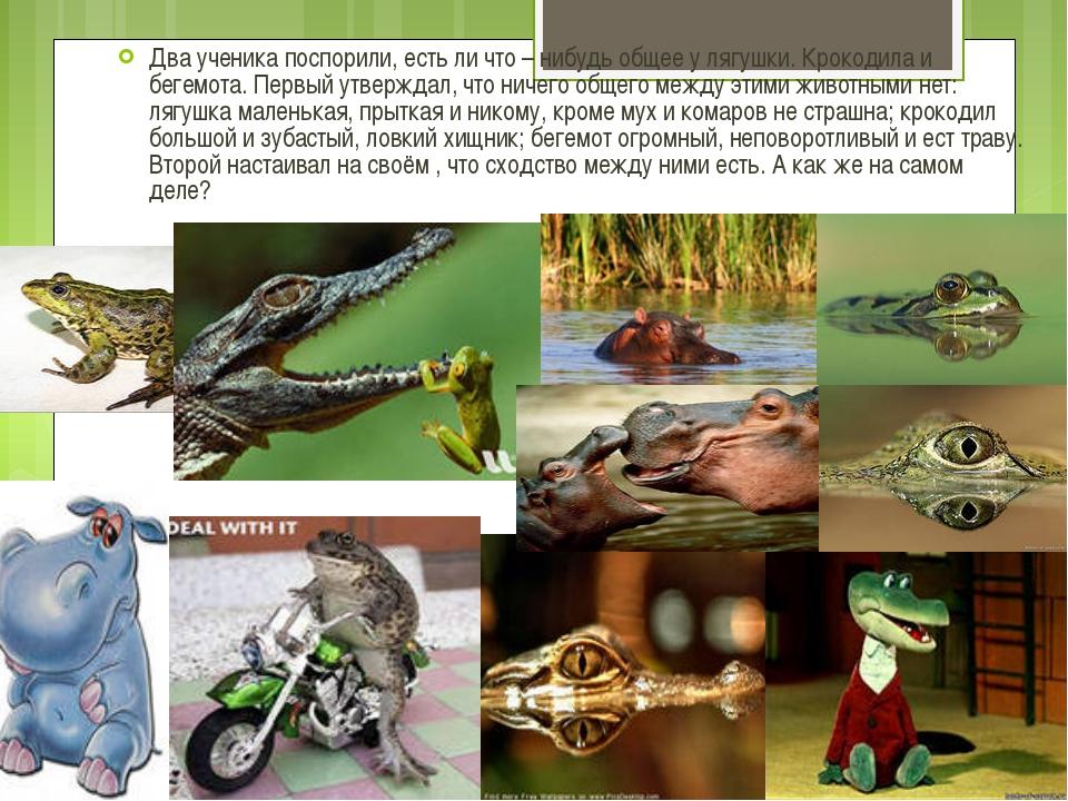 Два ученика поспорили, есть ли что – нибудь общее у лягушки. Крокодила и беге...