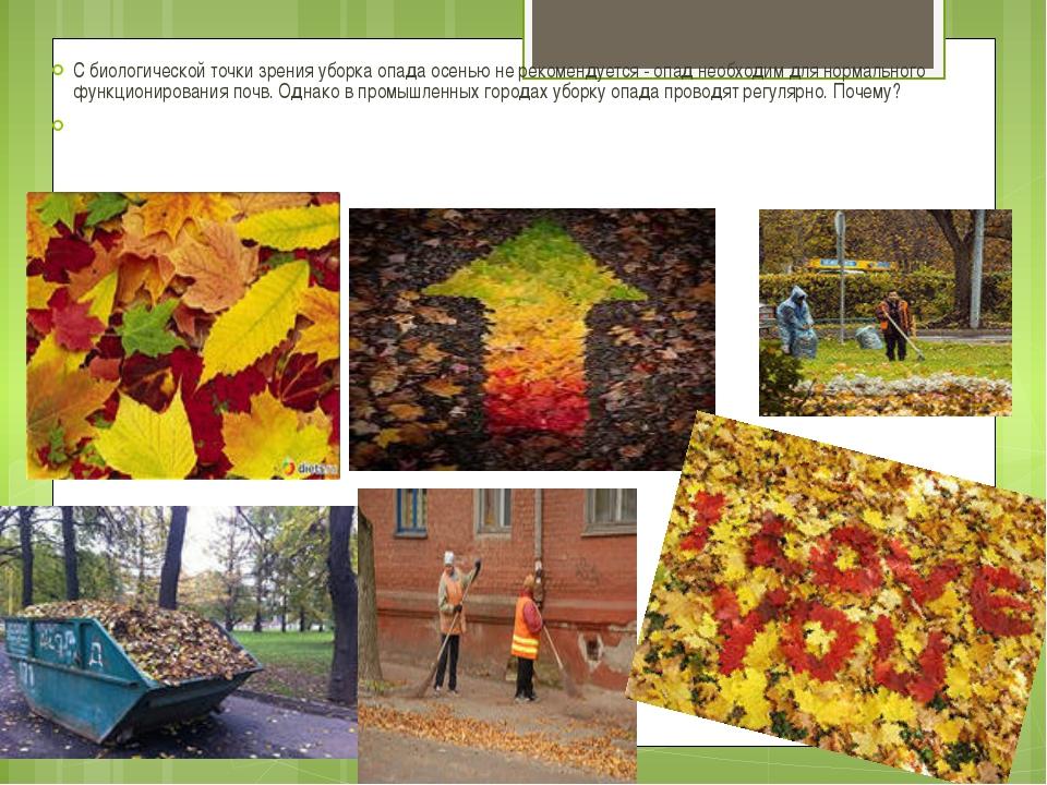 С биологической точки зрения уборка опада осенью не рекомендуется - опад необ...