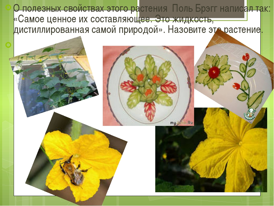 О полезных свойствах этого растения Поль Брэгг написал так: «Самое ценное их...