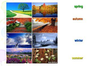 spring autumn winter summer