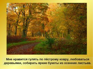 Мне нравится гулять по пёстрому ковру, любоваться деревьями, собирать яркие б