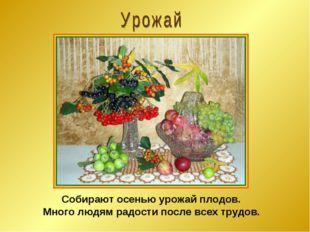 Собирают осенью урожай плодов. Много людям радости после всех трудов.