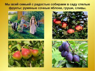 Мы всей семьей с радостью собираем в саду спелые фрукты: румяные сочные яблок