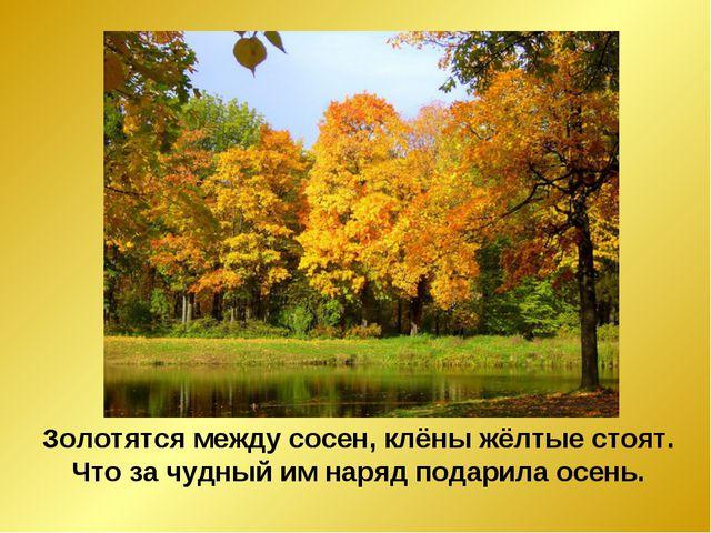 Золотятся между сосен, клёны жёлтые стоят. Что за чудный им наряд подарила ос...