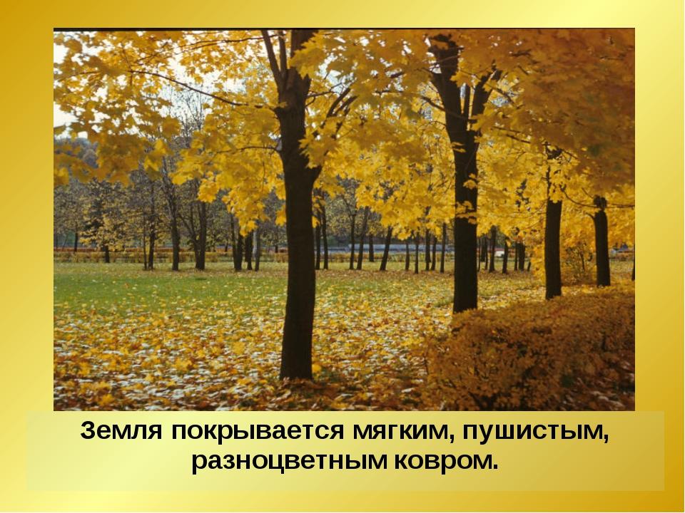 Земля покрывается мягким, пушистым, разноцветным ковром.