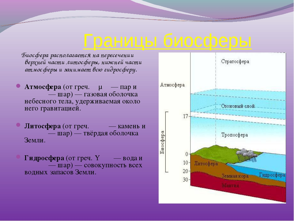 Границы биосферы Биосфера располагается на пересечении верхней части литосфе...