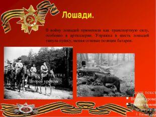 Лошади. В войну лошадей применяли как транспортную силу, особенно в артиллери