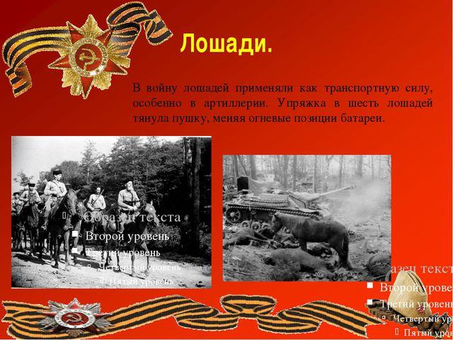 Лошади. В войну лошадей применяли как транспортную силу, особенно в артиллери...