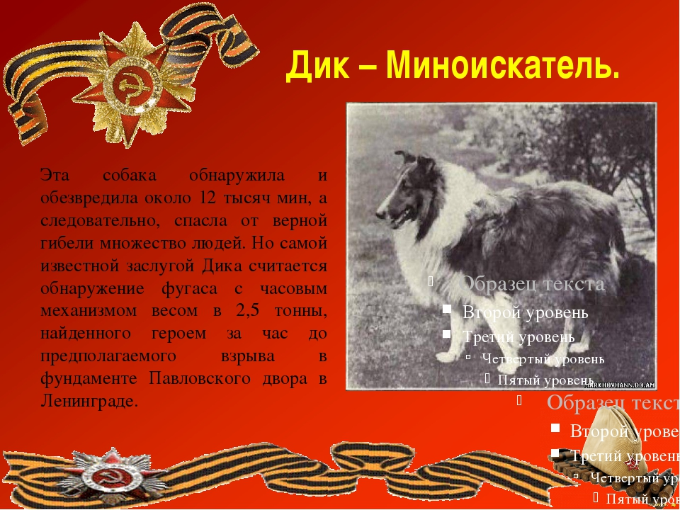 Дик – Миноискатель. Эта собака обнаружила и обезвредила около 12 тысяч мин, а...