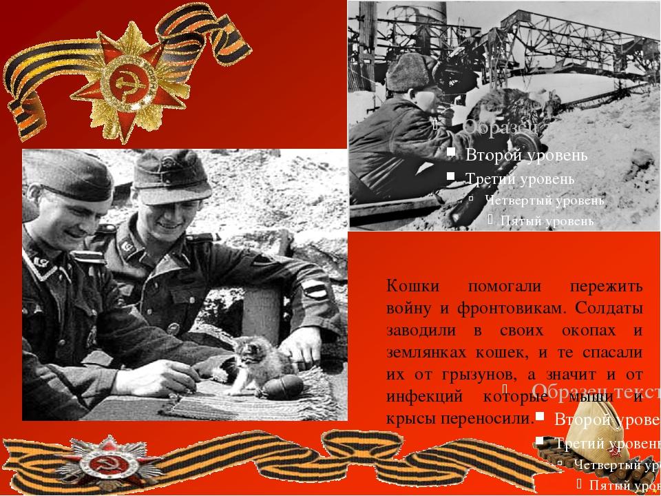 Кошки помогали пережить войну и фронтовикам. Солдаты заводили в своих окопах...