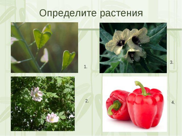 Определите растения 1. 2. 3. 4. Яковлева Л.А.