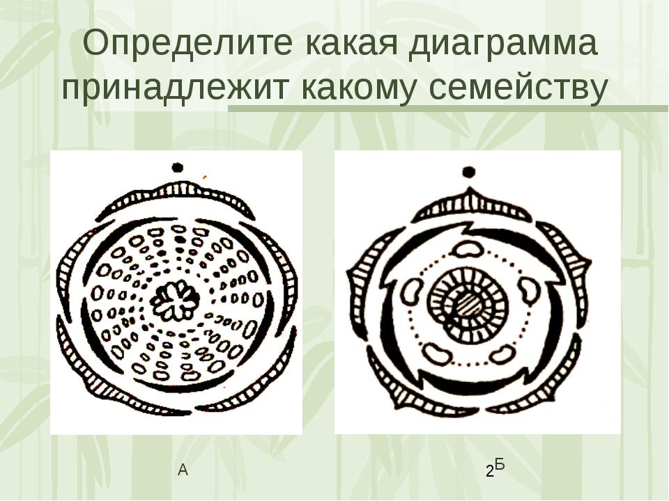 Определите какая диаграмма принадлежит какому семейству А Б Яковлева Л.А.