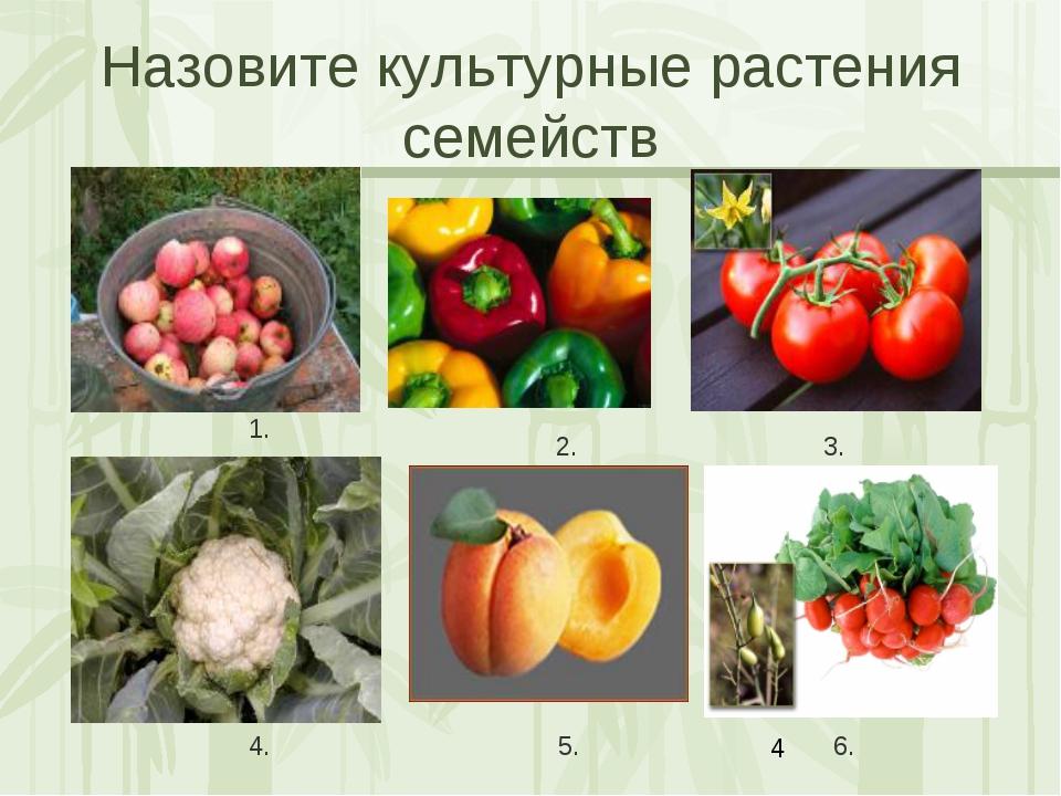 Назовите культурные растения семейств 1. 2. 3. 4. 5. 6. 1. Яковлева Л.А.