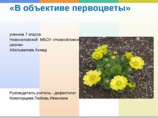 «В объективе первоцветы» ученика 7 класса Новоселовской МБОУ «Новосёловская ш