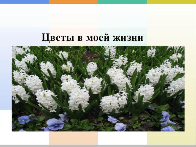 Цветы в моей жизни