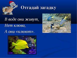 Отгадай загадку В воде они живут, Нет клюва, А они «клюют».