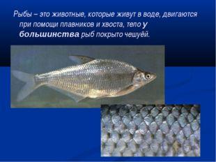 Рыбы – это животные, которые живут в воде, двигаются при помощи плавников и х