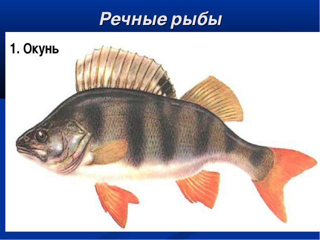 Речные рыбы окунь карп лещ щука 1. Окунь