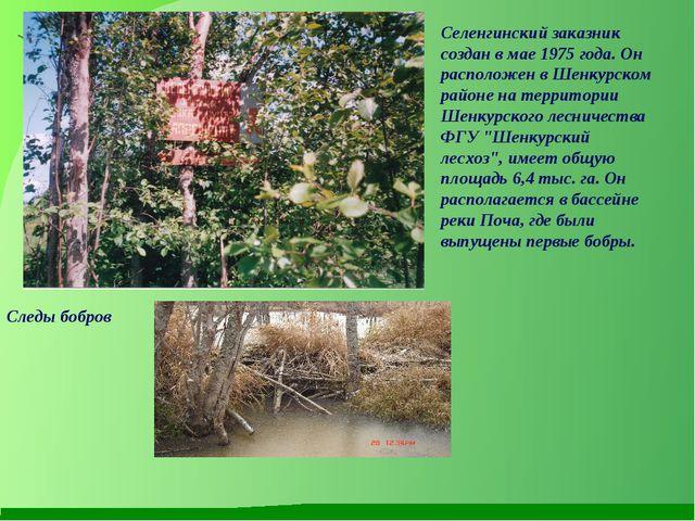 Селенгинский заказник создан в мае 1975 года. Он расположен в Шенкурском райо...