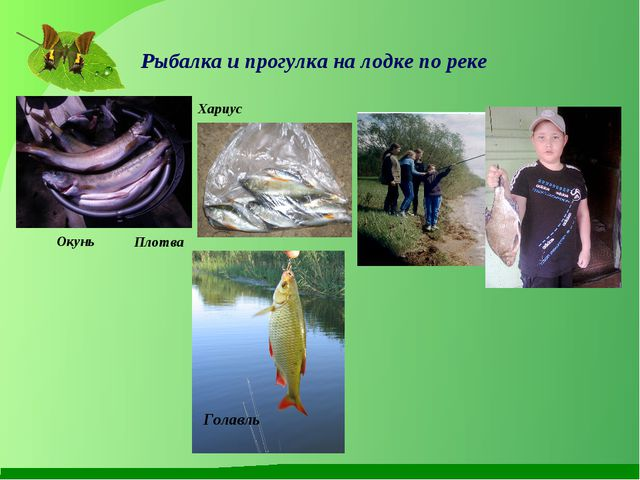 Рыбалка и прогулка на лодке по реке Хариус Плотва Голавль Окунь