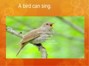 A bird can sing.
