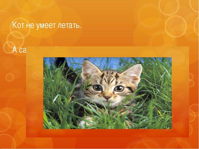 Кот не умеет летать. A cat cannot fly.