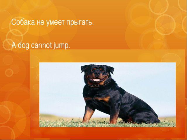 Собака не умеет прыгать. A dog cannot jump.