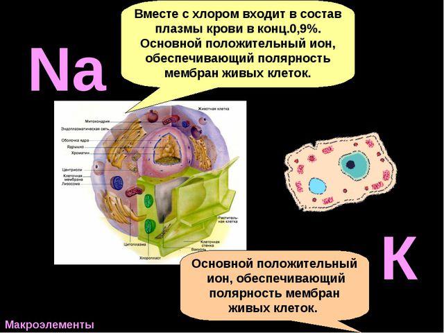 H P Вместе с хлором входит в состав плазмы крови в конц.0,9%. Основной положи...