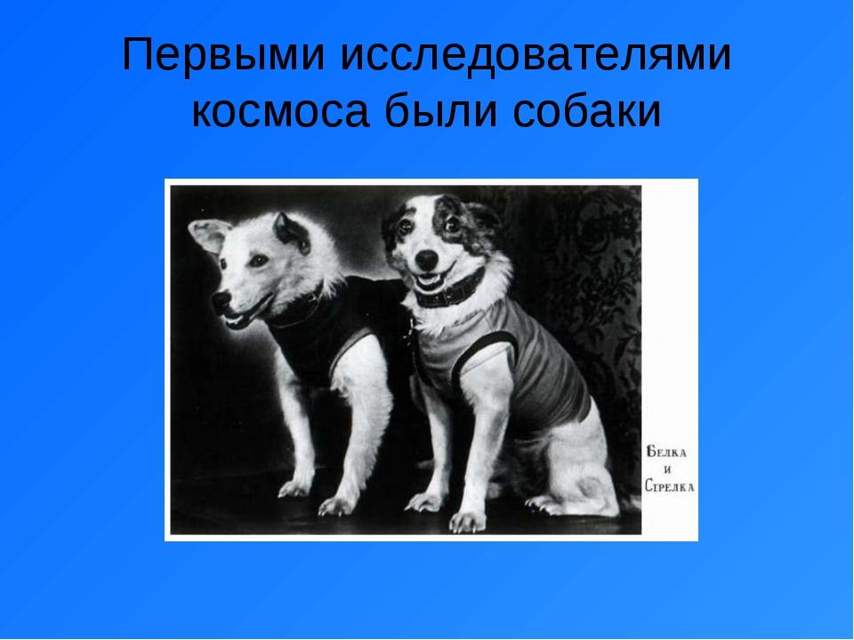 Первыми исследователями космоса были собаки