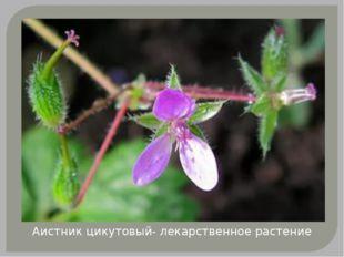 Аистник цикутовый- лекарственное растение