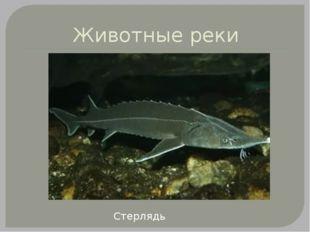 Животные реки Стерлядь