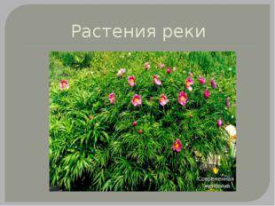 Растения реки