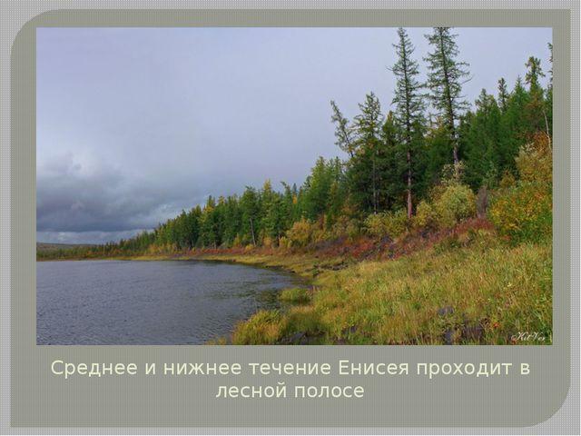 Среднее и нижнее течение Енисея проходит в лесной полосе