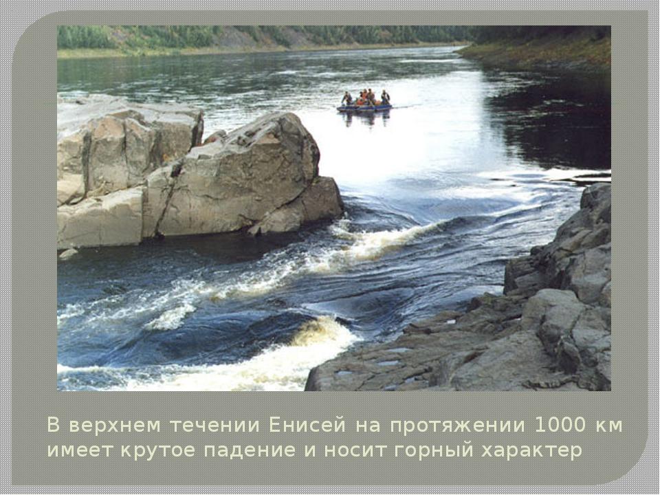 В верхнем течении Енисей на протяжении 1000 км имеет крутое падение и носит г...