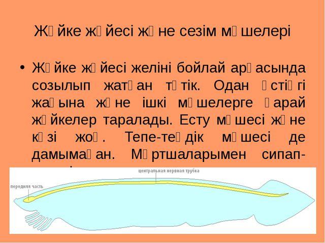 Жүйке жүйесі және сезім мүшелері Жүйке жүйесі желіні бойлай арқасында созылып...