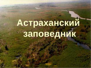 «Астраханский заповедник» Астраханский заповедник