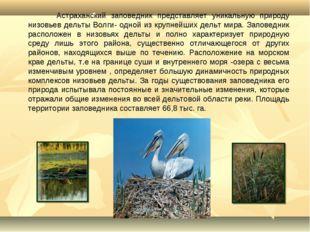 Астраханский заповедник представляет уникальную природу низовьев дельты Волг