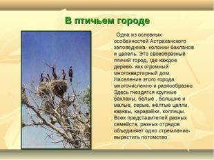 В птичьем городе Одна из основных особенностей Астраханского заповедника- кол