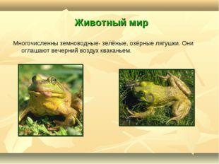 Животный мир Многочисленны земноводные- зелёные, озёрные лягушки. Они оглаша