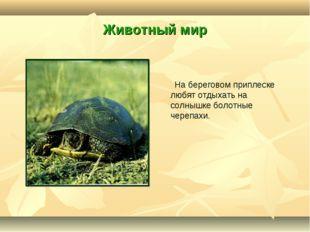 Животный мир На береговом приплеске любят отдыхать на солнышке болотные череп