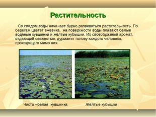 Растительность Со спадом воды начинает бурно развиваться растительность. По б