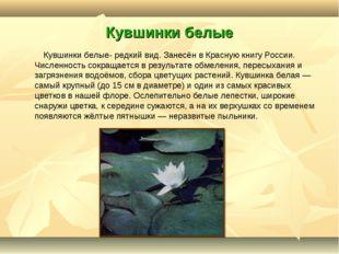 Кувшинки белые Кувшинки белые- редкий вид. Занесён в Красную книгу России. Чи
