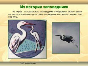 Из истории заповедника На гербе Астраханского заповедника изображены белые ца