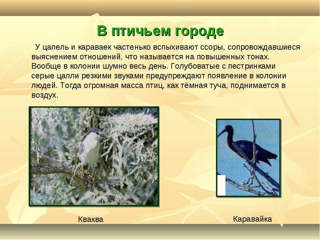 В птичьем городе У цапель и караваек частенько вспыхивают ссоры, сопровождавш...