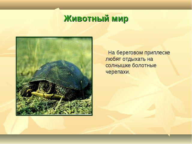 Животный мир На береговом приплеске любят отдыхать на солнышке болотные череп...